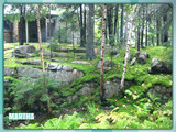 gardening_with_moss.jpg