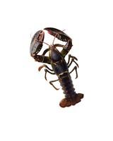 lobster-001-d112989.jpg