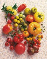 ml003_sip08_tomatos.jpg