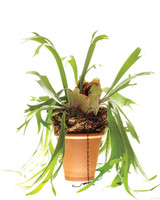 plant-074-mld108592.jpg