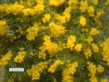 3135_040408_fragrant.jpg