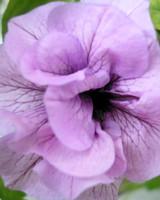 garden_contest_50935.jpg