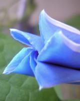 garden_contest_50936.jpg