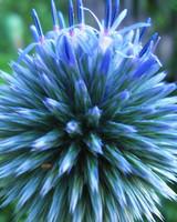 garden_contest_50941.jpg