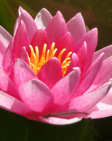 garden_contest_51525.jpg