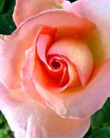 garden_contest_54739.jpg