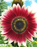 garden_contest_55507.jpg