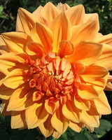 garden_contest_55920.jpg