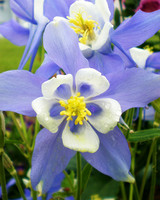 garden_contest_59217.jpg