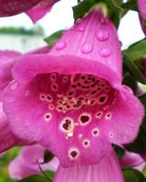 garden_contest_59218.jpg