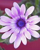 garden_contest_59797.jpg