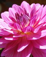 garden_contest_63274.jpg