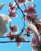 garden_contest_77512.jpg