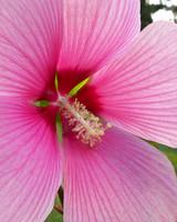 garden_contest_77549.jpg