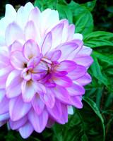 garden_contest_77590.jpg