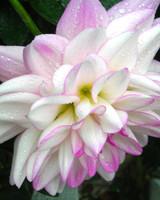 garden_contest_77720.jpg