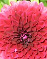 garden_contest_78140.jpg
