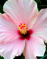 garden_contest_78300.jpg