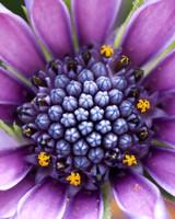 garden_contest_80203.jpg
