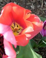garden_contest_81448.jpg