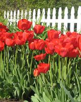ori29992_your_garden.jpg