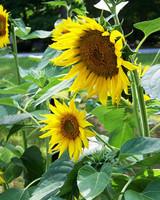 ori49135_your_garden.jpg