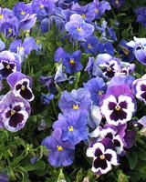 ori49241_your_garden.jpg
