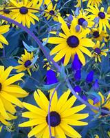 ori49306_your_garden.jpg