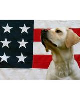 p_patriotic_09_91366.jpg