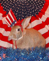p_patriotic_09_91466.jpg