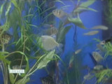 3127_042108_fish_tank.jpg