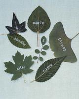 mla101445_0805_leaves.jpg