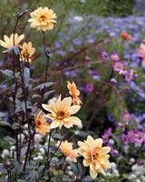 peachflowers-md110341.jpg