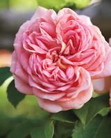 pinkflowers4-md110341.jpg