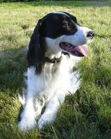 r_pets_jocelyn_dogs_3.jpg