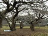 3024_101907_apple_tree.jpg