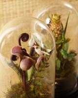 3126_022808_waxflowers.jpg