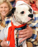 6034_102810_sailor_dog.jpg