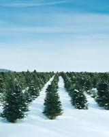 la102995_1207_treefarm.jpg