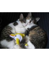 pets-13504299-31449734.jpg