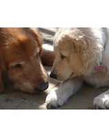 pets-13504442-31604942.jpg