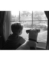 pets-13523961-19338737.jpg