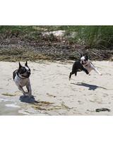 pets_beach_ori00094178.jpg