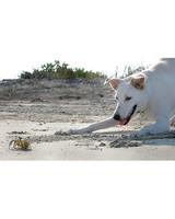 pets_beach_ori00094850.jpg