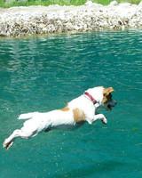 pets_beach_ori00095936.jpg