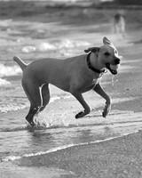 pets_beach_ori00096230.jpg