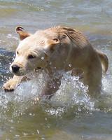 pets_beach_ori00096593.jpg