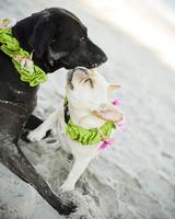 pets_beach_ori00097088.jpg