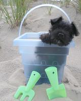 pets_beach_ori00097141.jpg
