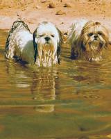 pets_beach_ori00097748.jpg